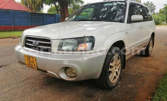 Buy Used Subaru Forester White Car in Harare in Harare