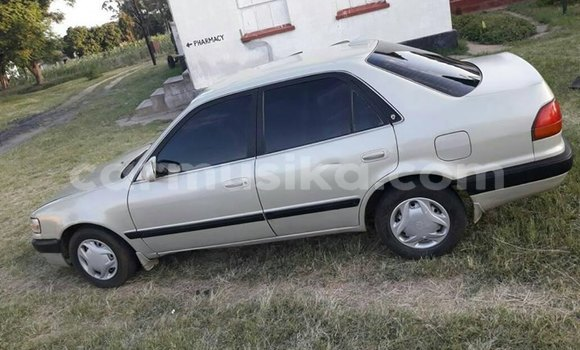 Buy Used Toyota Corolla Silver Car in Bulawayo in Bulawayo
