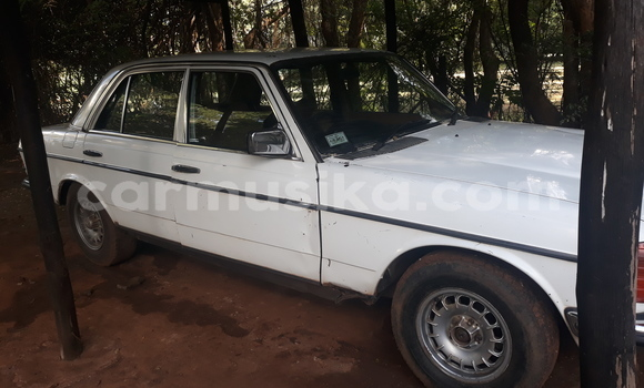 Buy Used Mercedes‒Benz 300CD White Car in Harare in Harare