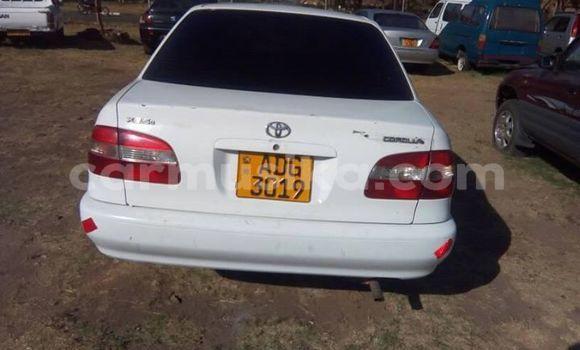 Buy Import Toyota Corolla White Car in Harare in Harare
