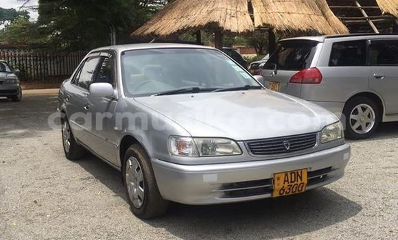 Buy Used Toyota Corolla Silver Car in Harare in Harare