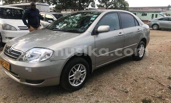 Buy Used Toyota Corolla Silver Car in Harare in Harare