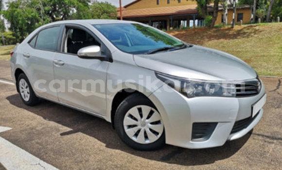 Buy Used Toyota Corolla Silver Car in Alexandra Park in Harare