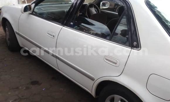 Buy Used Toyota Corolla White Car in Gweru in Midlands